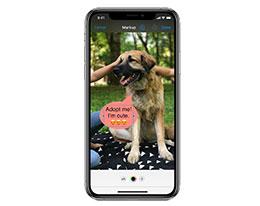"""如何使用 iPhone """"标记""""功能为照片添加文字?"""