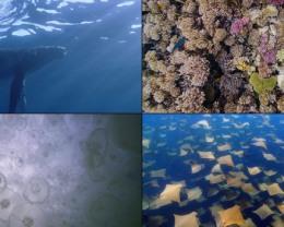 Apple TV 将迎来全新「水下世界」屏幕保护程序