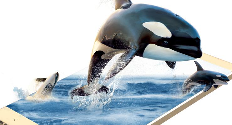 壁纸 动物 鲸鱼 740_400