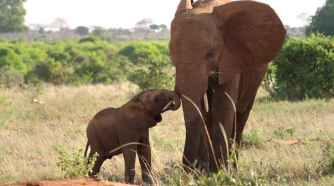 Apple TV+纪录片「大象女王」发布预告,讲述象群穿越非洲之旅