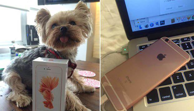 已有幸运顾客拿到iPhone 6s