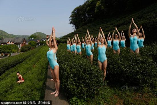 杭州模特复赛现场:美女选手茶园内表演芭蕾、瑜伽