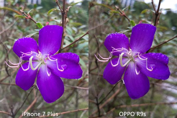 双摄真比单摄好?OPPO R9s和苹果7P拍照对比
