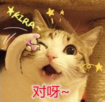 【有铲阶级】日本人发明了一种药,可以有效戒断人类对猫的喜爱