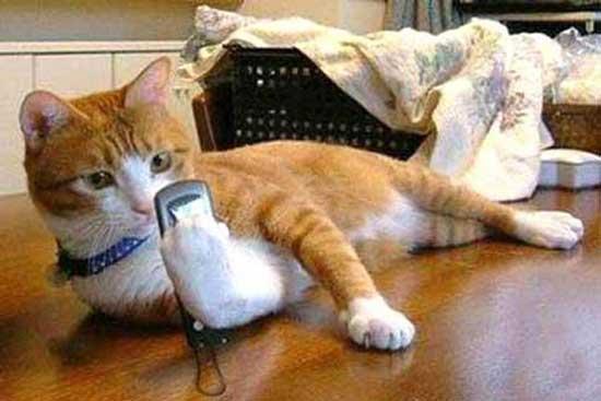 为健康 睡前玩手机需注意这7点