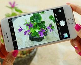 iPhone 微距摄影:一花一世界的美丽与感悟
