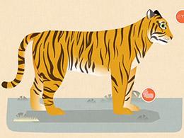 每日推荐:给孩子讲一堂生动且有趣的动物知识《哺乳动物》