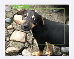 iOS 13 相机新增 AI 识别:可自动认出猫狗等拍摄对象