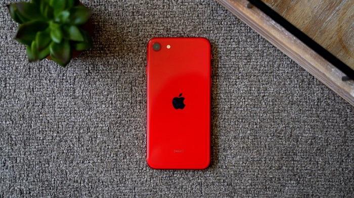 苹果新款 iPhone SE 照相评测:对比 iPhone 8 更加出色