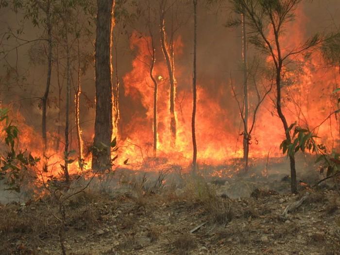 苹果承诺将支持加州山火救援工作